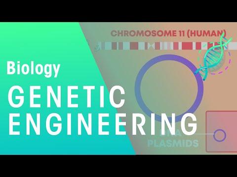 Genetic engineering | Genetics | Biology | FuseSchool