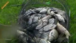 Ловля карася на червя Catching crucian on the worm.