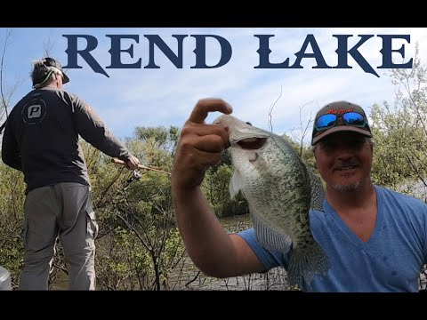 Rend Lake Spawning Crappie In The Buck Brush