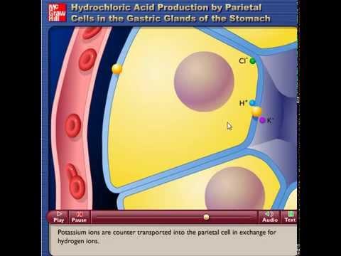 traduccion del video produccion de acido clorhidrico en las ...