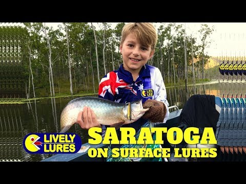 Saratoga on surface lures fishing with Lively Lures on the Ziggy SD 70 at Borumba Dam Queensland