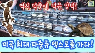 세계 파충류 대잔치 미국 최대 파충류 엑스포 방문기