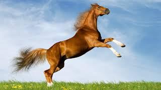 Картинка лошадь. Небо, конь, поле, лето, резвится, одуванчики, лошадь, коричневый