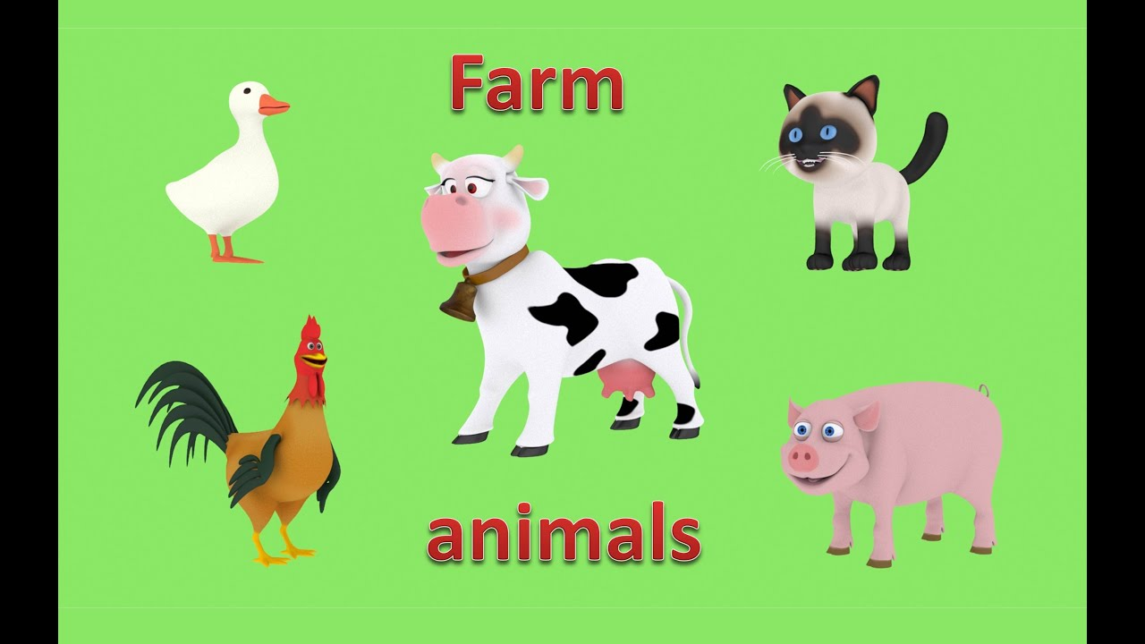 What's the Dumbest Farm Animal?