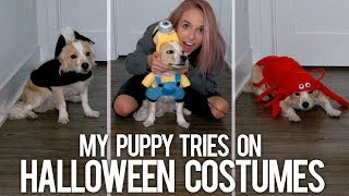 MY PUPPY TRIES ON HALLOWEEN COSTUMES