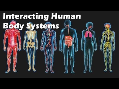 Interacting Human Body Systems
