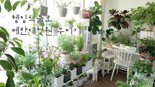 헹잉식물로 베란다정원 꾸미기/더욱 풍성해진 4월의 정원
