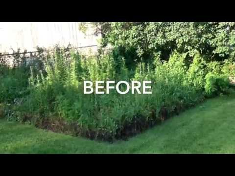 Pulling Weeds Before And After