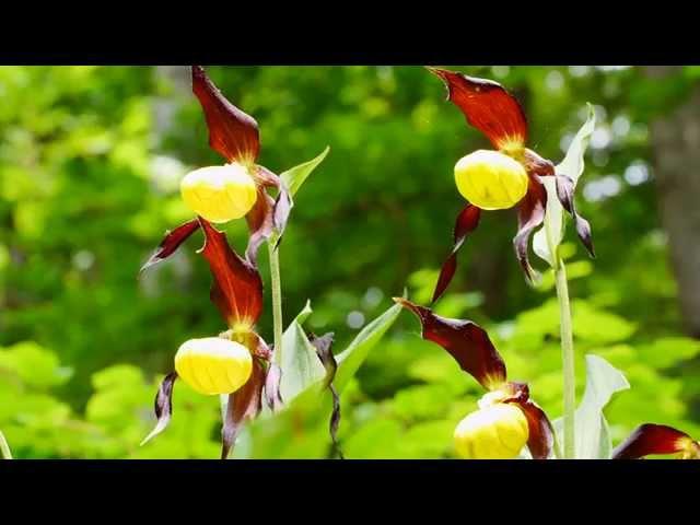 Typische Blütenpflanzen auf Trockenrasen nahe Würzburg