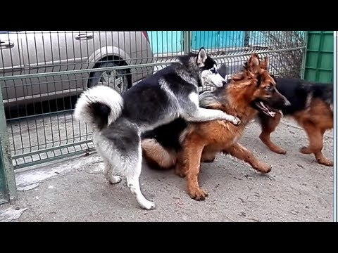 . Aggression dogs.    . .