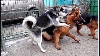 видео Коррекция поведения собаки, как убрать агрессию у собаки