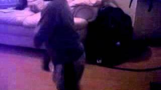 kehyarn 5 Dancing DJ Cndo Terminator 2011