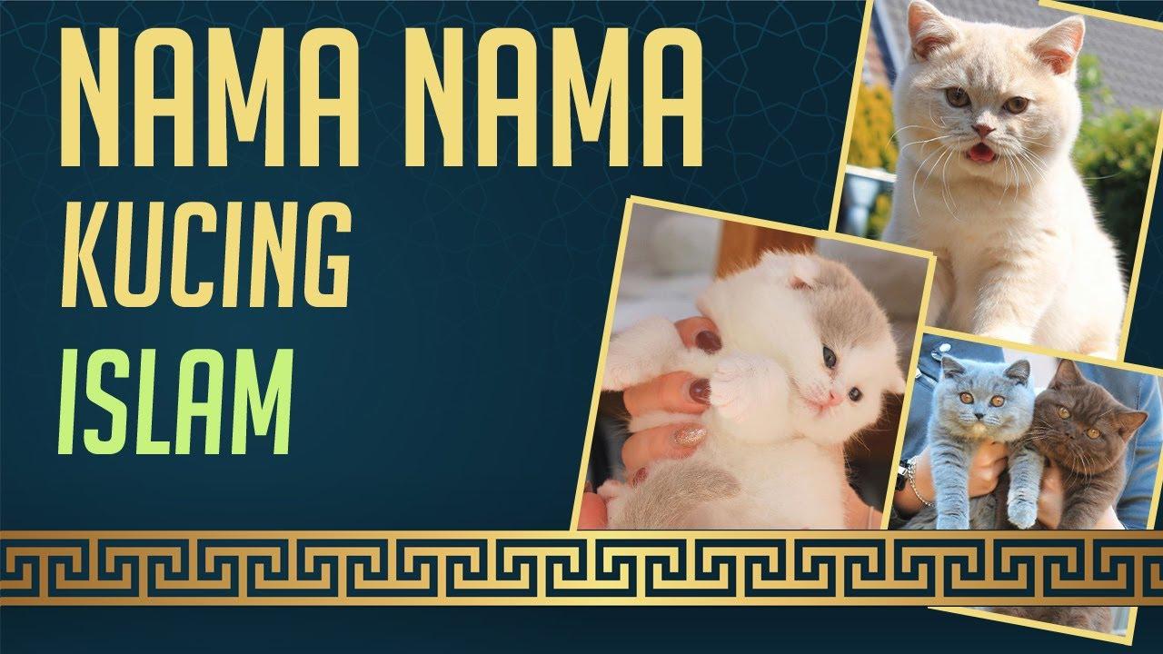 Nama Kucing Yang Bagus Dalam Islam Youtube
