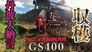 丹波大納言小豆を収穫【2020年】