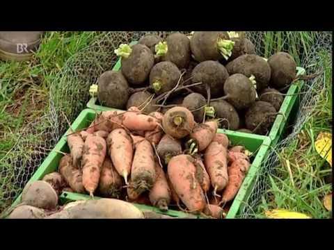 26930 Bibliothek agriculture BR Bau einer Erdmiete׃ Gemüse einlagern ¦ Unser Land ¦ BR Fernsehen