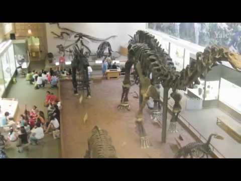 David Skelly on the Yale Peabody Museum: Shaping the future of a favorite childhood haven
