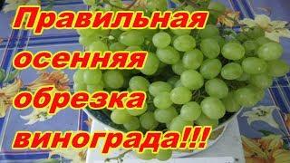 видео Обрезка винограда