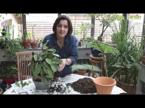 Comment rempoter vos plantes d 39 int rieur avec le granul doovi - Comment rempoter une plante d exterieur ...