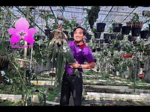 Vườn Lan Đẹp Như Tiên Cảnh Của Anh Văn Sĩ Ở Bảo Lộc Lâm Đồng [HOALANTV]