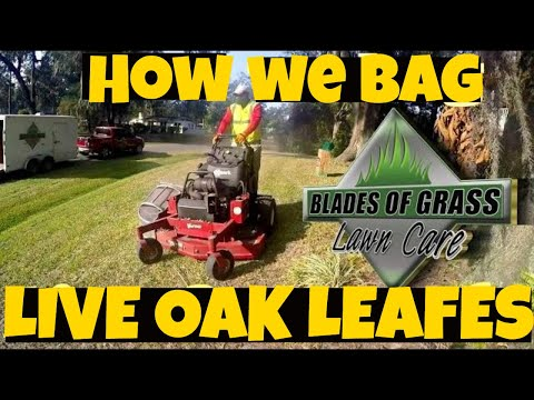 bagging-leaves-with-the-accelerator-leaf-bagger