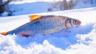 ЛУЧШИЕ ТОВАРЫ ДЛЯ ЗИМНЕЙ РЫБАЛКИ С АЛИЭКСПРЕСС ! Зимняя рыбалка !