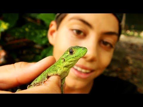 This Lizard Ducked My Pet