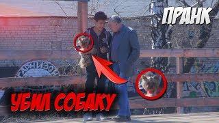 Социальный эксперимент: Убийство собаки / killing a dog Prank