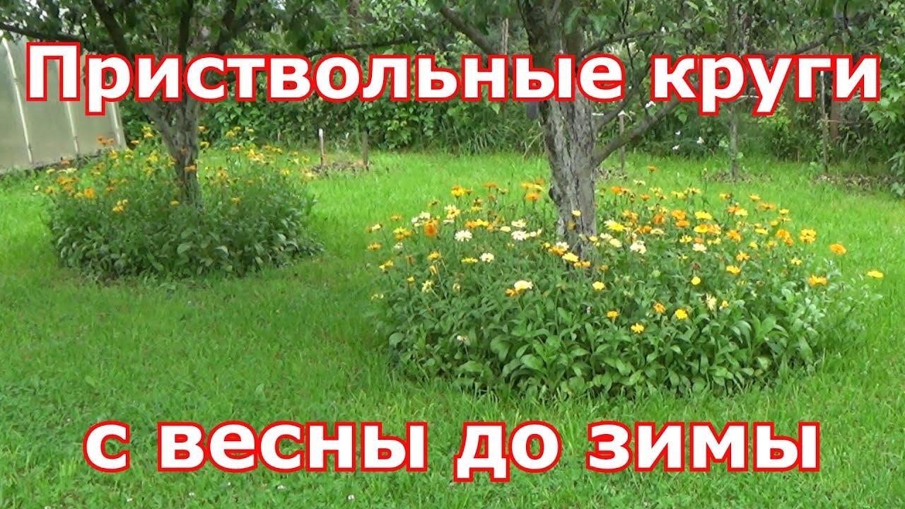Приствольные круги с весны до зимы, как содержать их в порядке и что посадить вокруг деревьев.