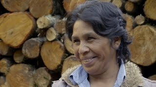 Protecting Forests in Mexico Reaps Rewards