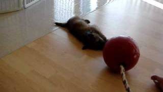 Fearghus And The Jolly Ball.mpg