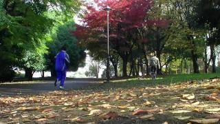 秋色に染まった小金井公園をお散歩する、ウィペットのモヒートとテキーラ.
