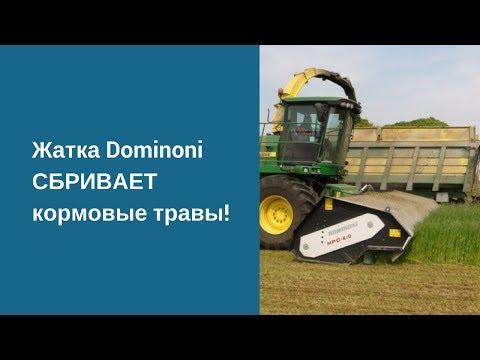 Жатка Dominoni СБРИВАЕТ кормовые травы! Multi Power Disc - жатка кормовая доминони. Работа жатки.