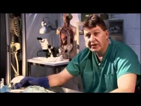 The Secrets of Ancient Medicine [Full Documentary]