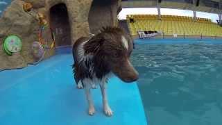 Собака дельфинов догоняка!!!  )))))))
