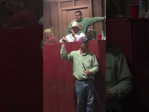 Tennessee Cattle Auction