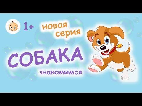 НОВАЯ СЕРИЯ! #Развивающие #мультики #для #самых #маленьких детей от 1 года. ЗНАКОМСТВО С СОБАКОЙ