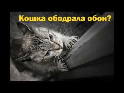Кошка поцарапала обои.Что делать?  Реставрация. Как восстановить обои после кота