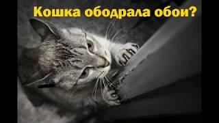 видео Почему кошки обдирают когтями мебель или обивку дверей?