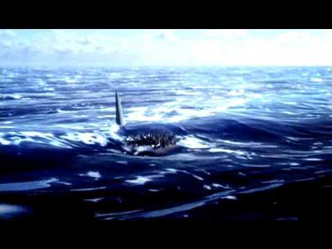 Die Abenteuer von Sharkboy und Lavagirl 3D (Trailer - deutsch)
