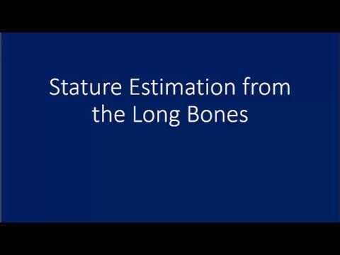 Stature Estimation