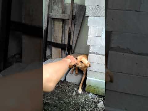 Rocky anjing pintar thumbnail