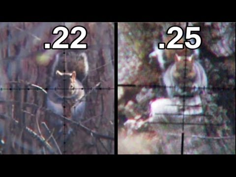 Squirrel Hunting .22 vs .25 Comparison