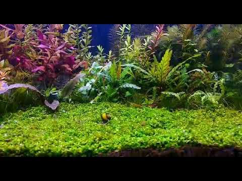 Toko Aquarium Dan Aquascape Indonesia - YouTube