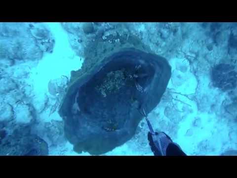 Key Largo Lionfish Derby 2018
