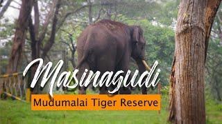 Masinagudi - Theppakadu- Mudumalai Tiger Reserve -Morning Bike Ride