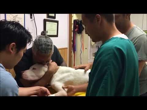 Las Despedidas Más Tristes Entre Perros Y Sus Dueños (Te hará Llorar)