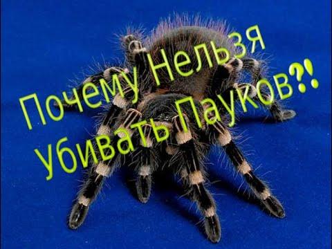Почему нельзя убивать пауков?! Ответ есть!
