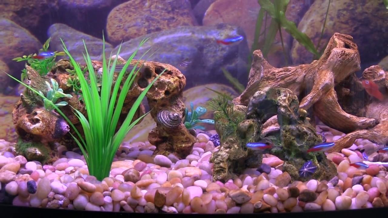 29 Gal Aquarium