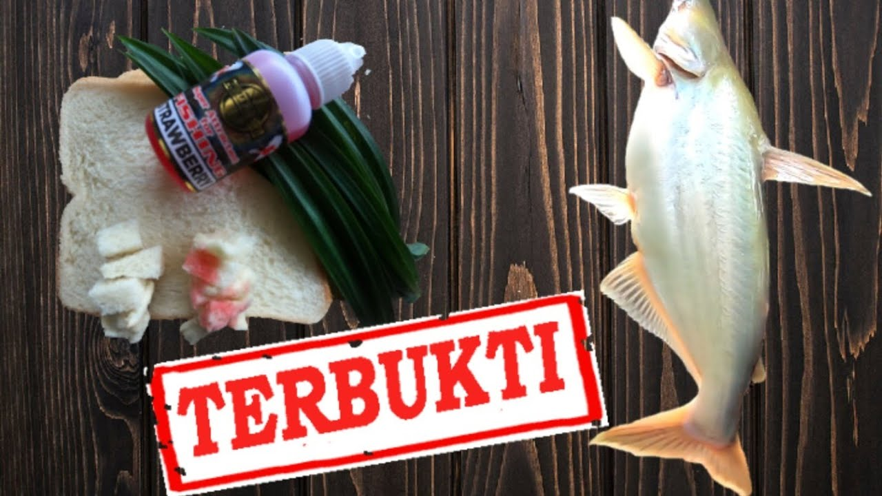 Umpan Jitu Mancing Ikan Patin Liar Wajib Anda Coba Youtube