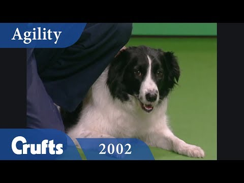 Team Agility Final from Crufts 2002 | Crufts Classics